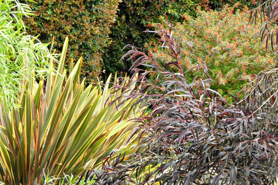 textura en el jardín