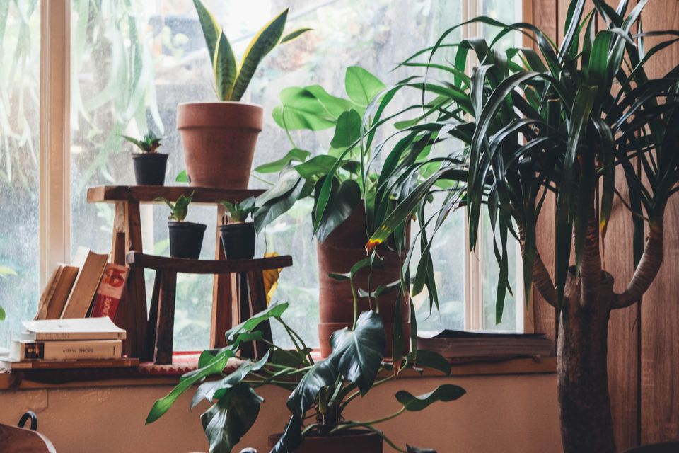potted green plants inside a window brings in life energy in feng shui philosophy