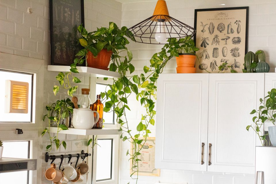 pothos plants in the kitchen