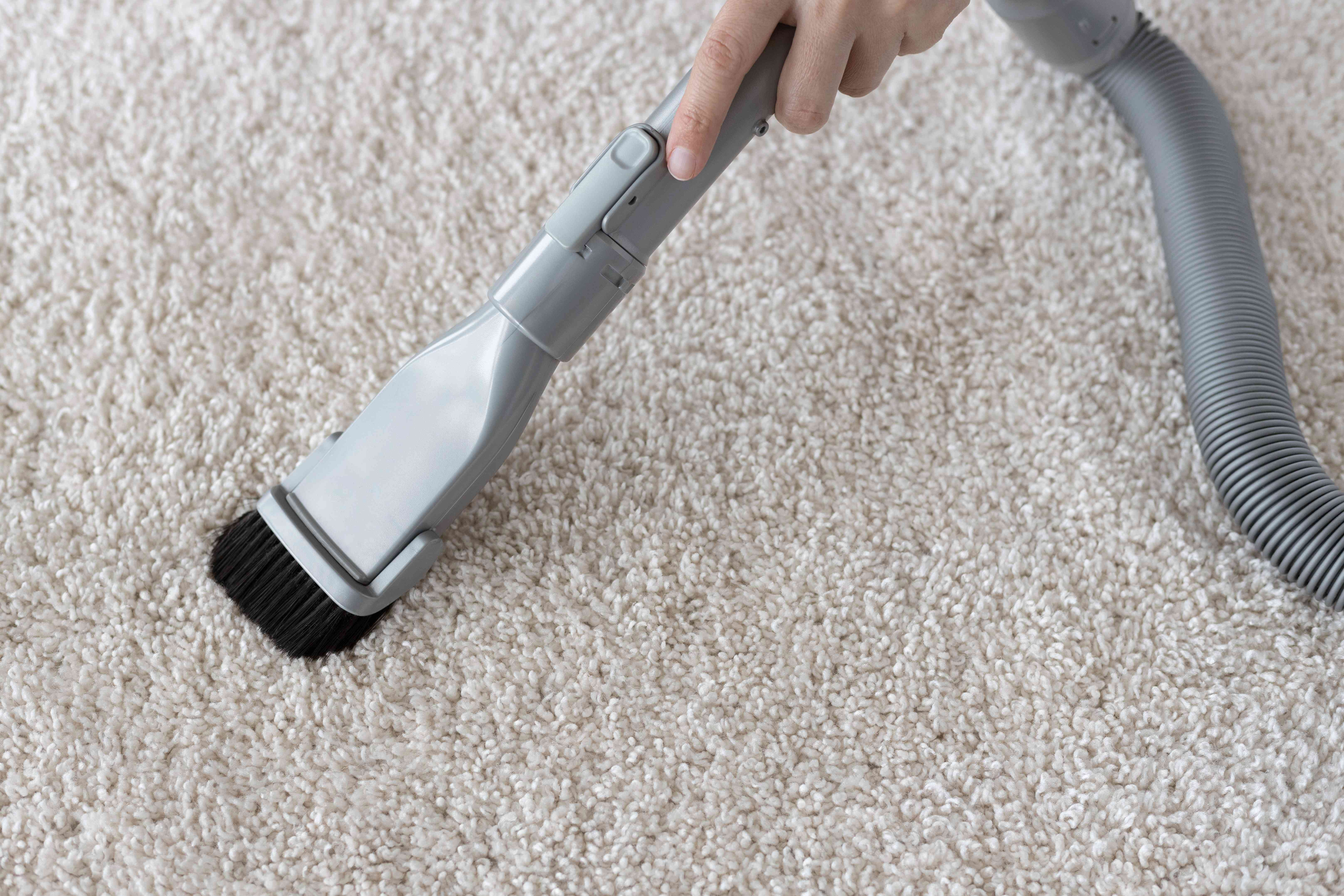 Cream-colored carpet vacuumed after air drying