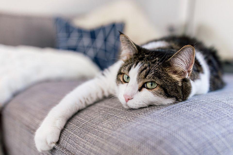 kitty on a sofa