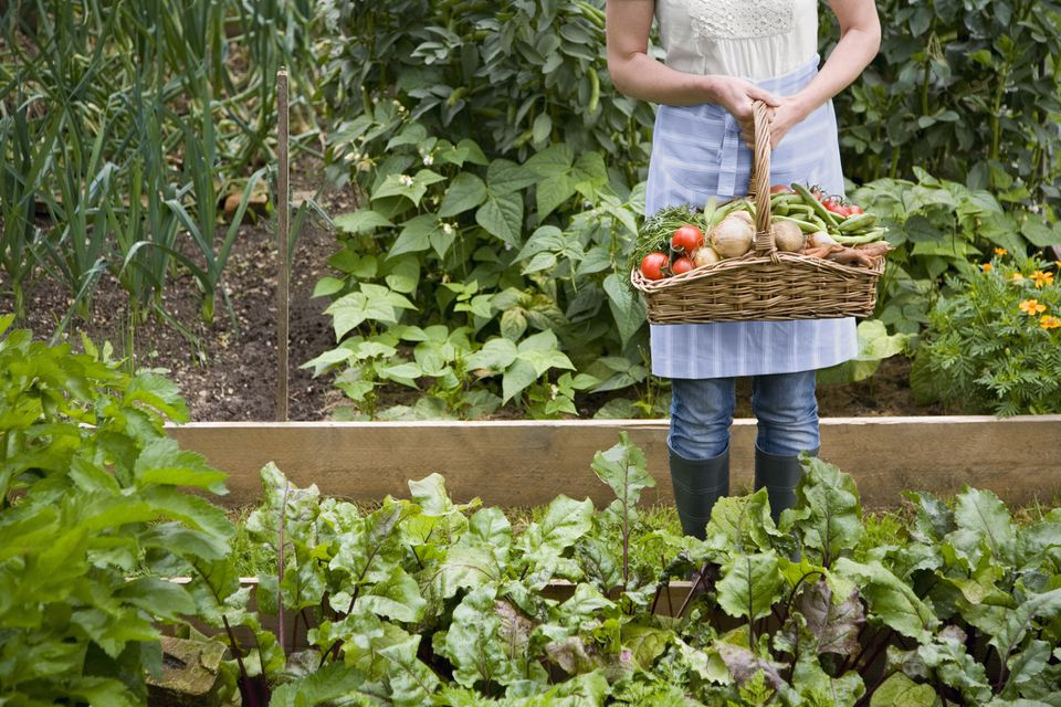 Woman holds basket of fresh garden vegetables