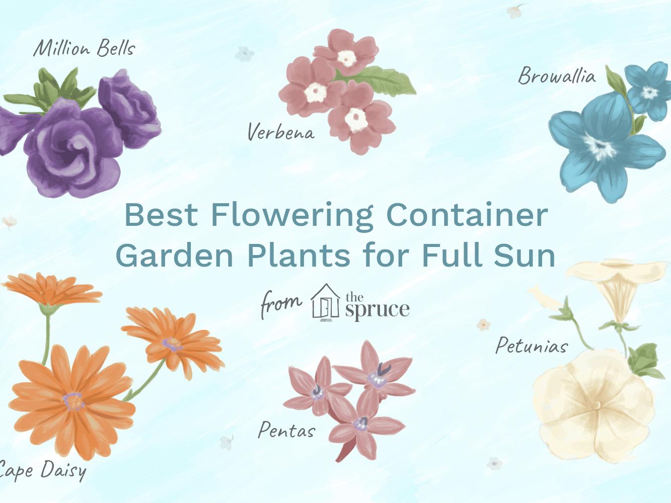 Best Flowering Container Garden Plants