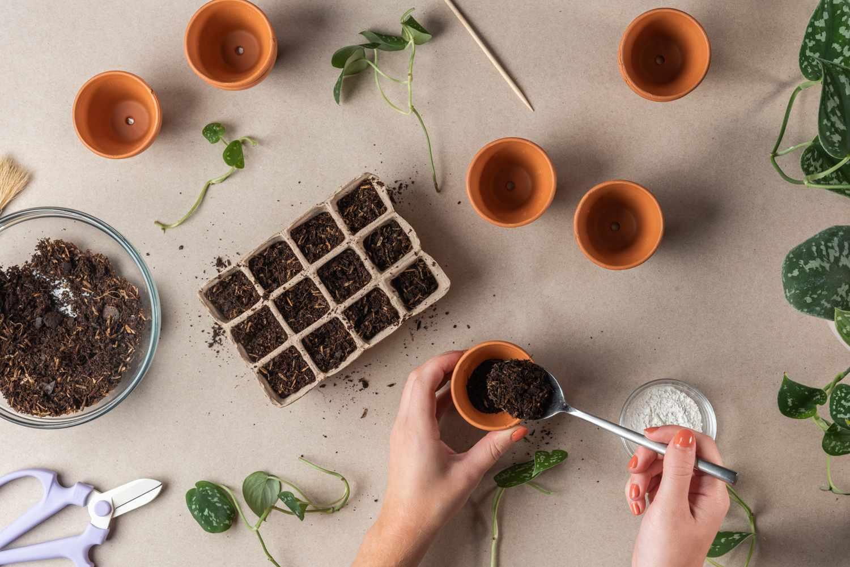 preparing a planting tray
