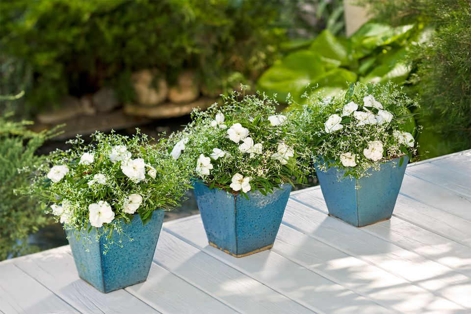 Diamond Frost® Euphorbia and Infinity® White Impatiens