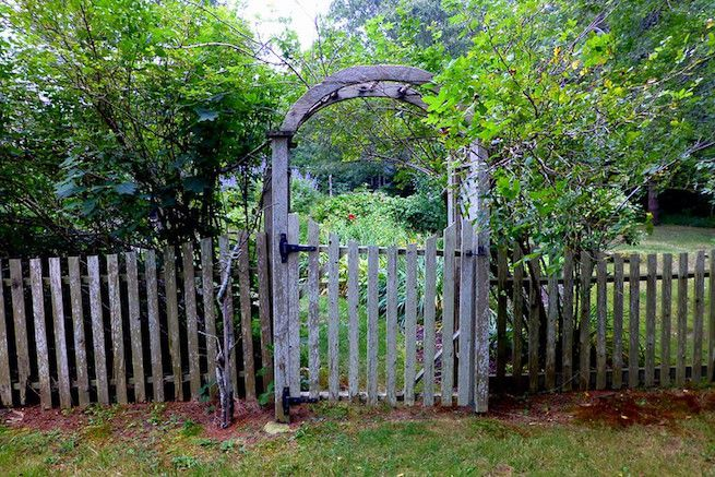 Weathered wood fence and arbor gate with shrubs