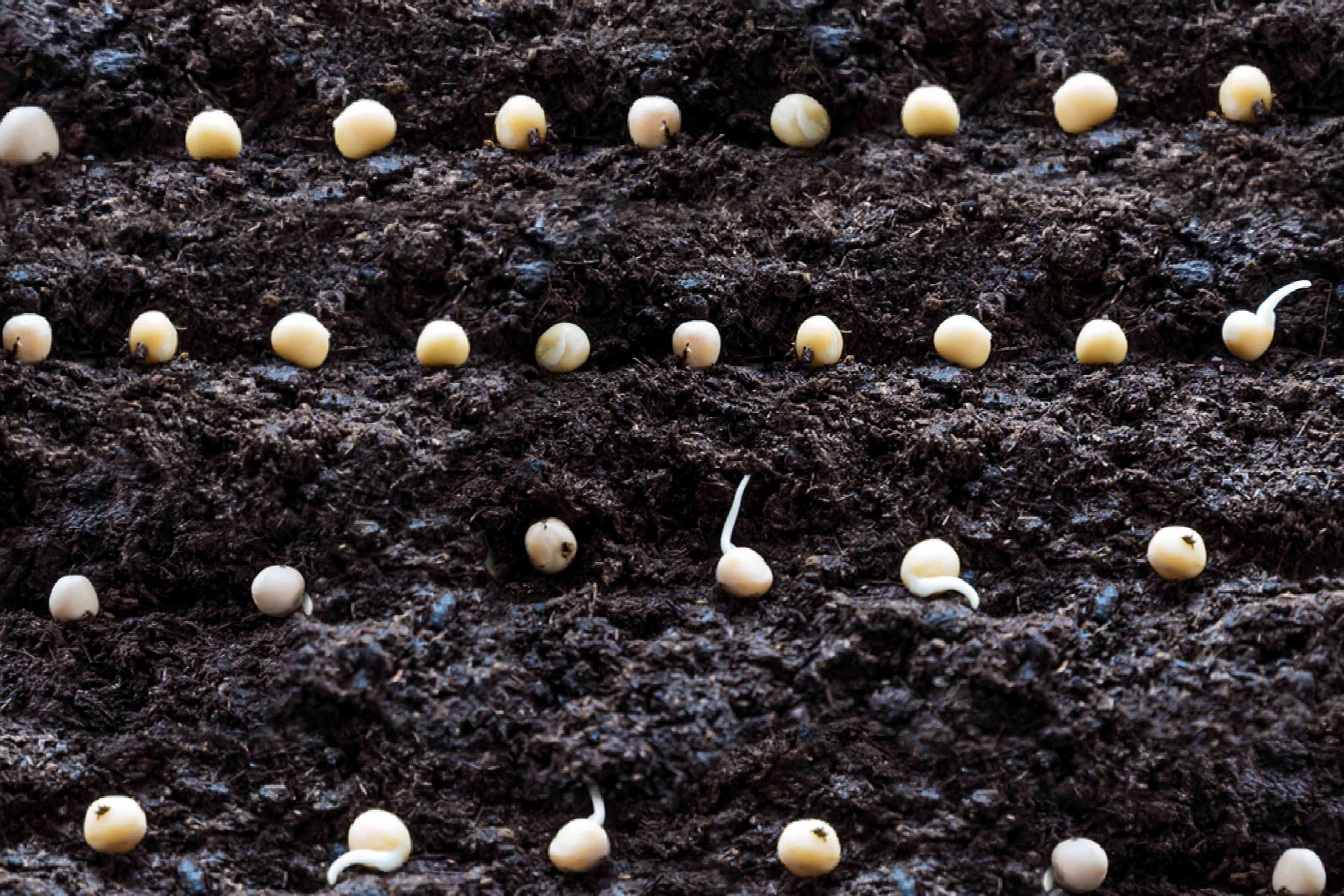 sowing and planting seeds
