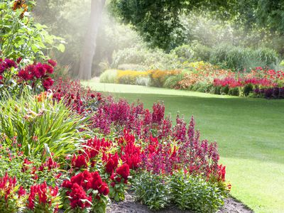 Bright garden with clear path
