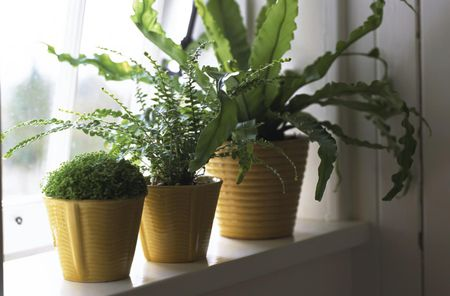 lighting for houseplants. lighting for houseplants
