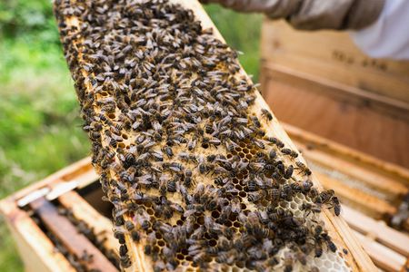 The Best Places to Buy Beekeeping Supplies Online