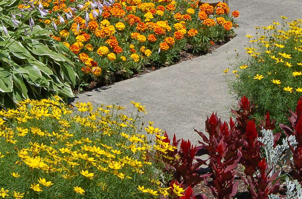 Mixture of annuals and perennials