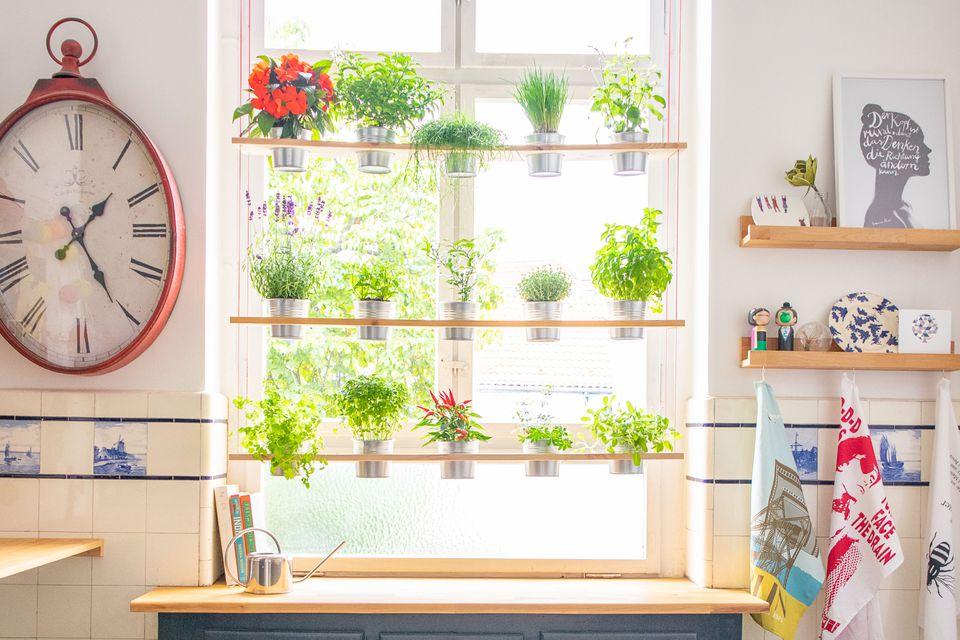 Kitchen window hanging herb garden