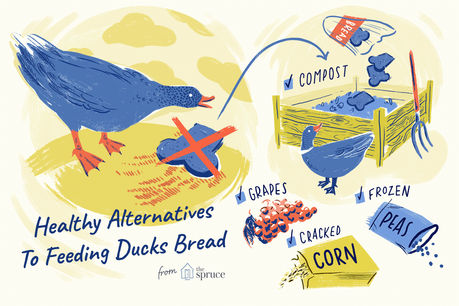 Why Bread Is Bad For Ducks