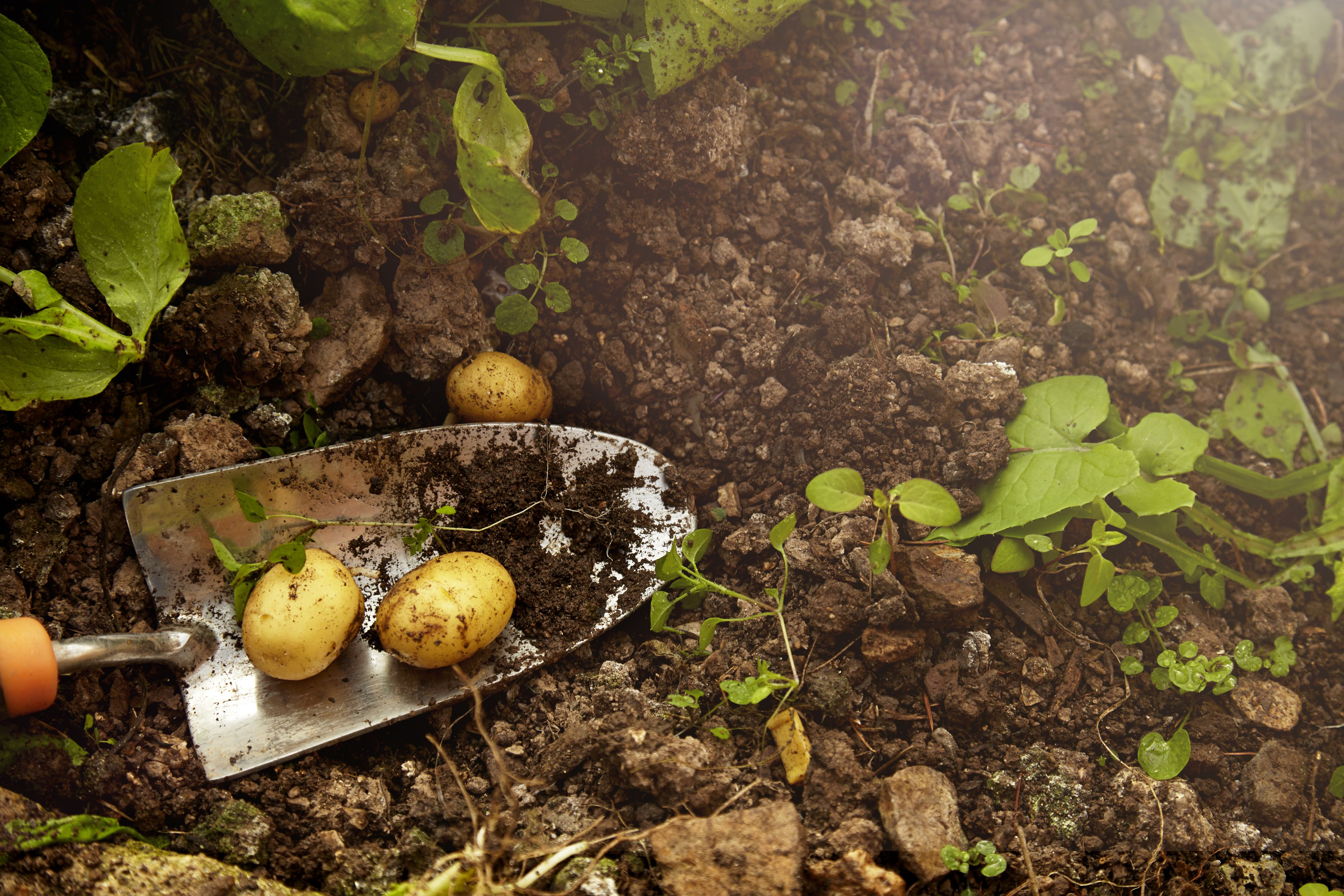 Understanding and Improving Clay Soil
