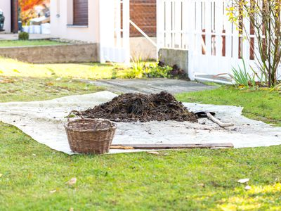 Small pile of rotted manure on tarp in the front yard. Garden shovel and basket near heap. Organic fertilizer for manuring soil