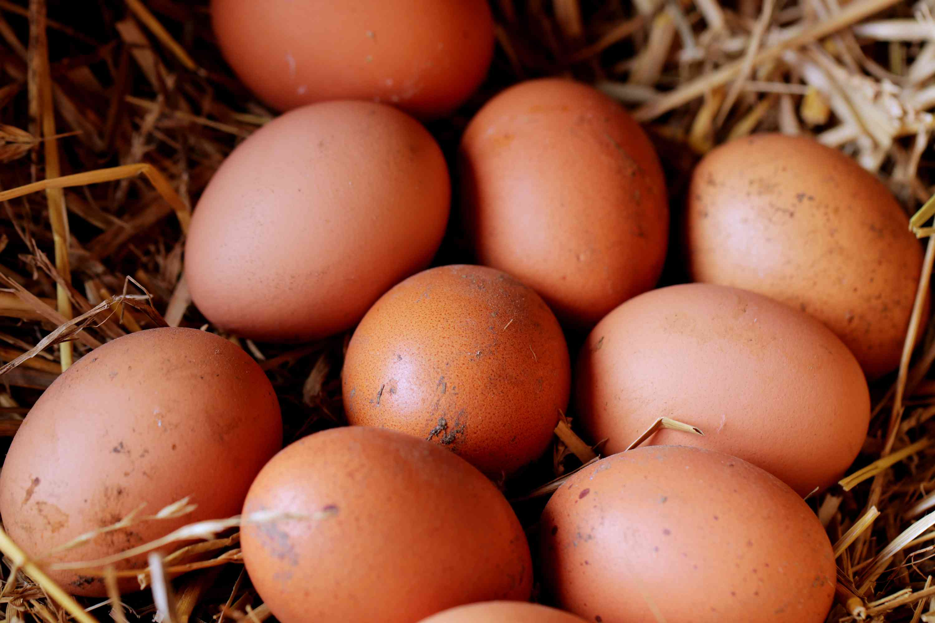 collecting eggs is a daily chicken task