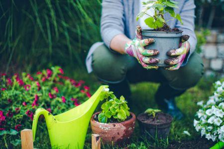 Gardening Chores To Do List For The Month Of June