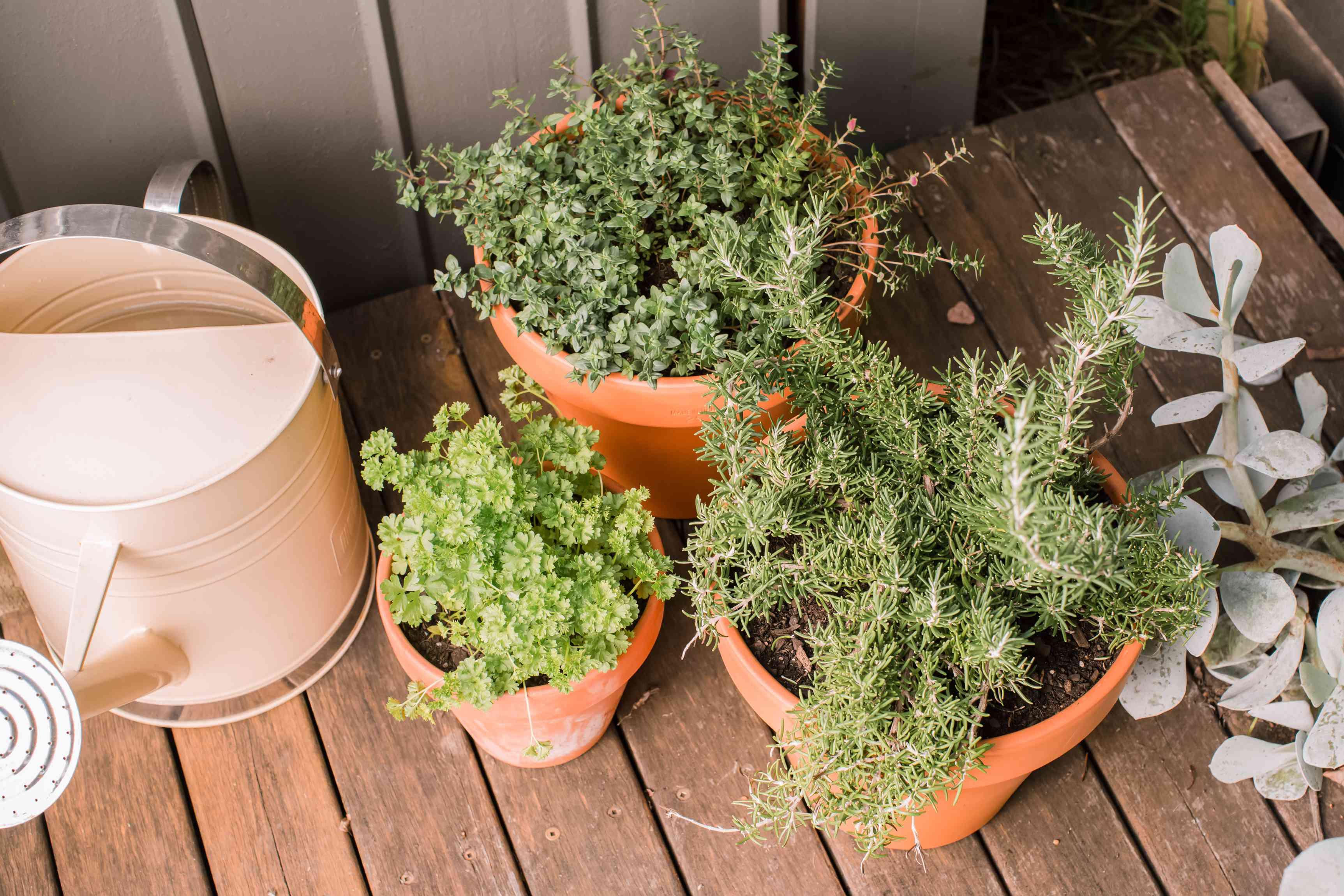 herb garden on a patio