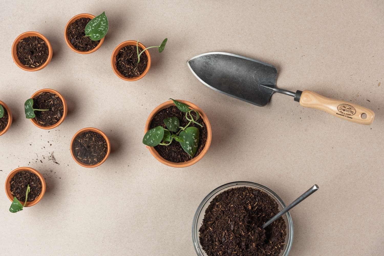 cuttings in pots