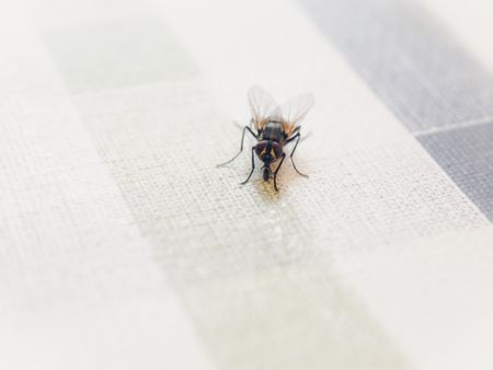 How To Get Rid Of Flies Quickly And Naturally