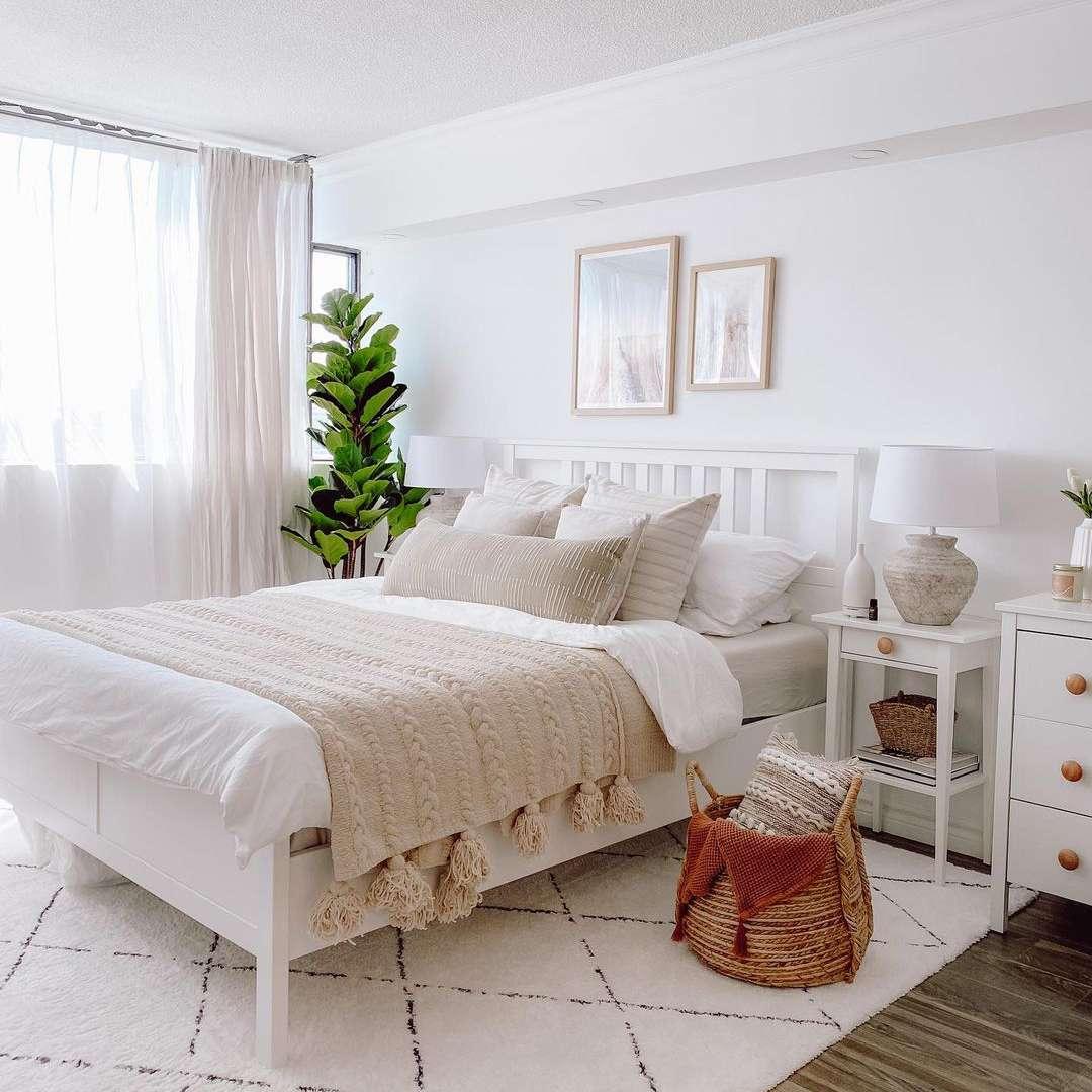plant in corner of white room
