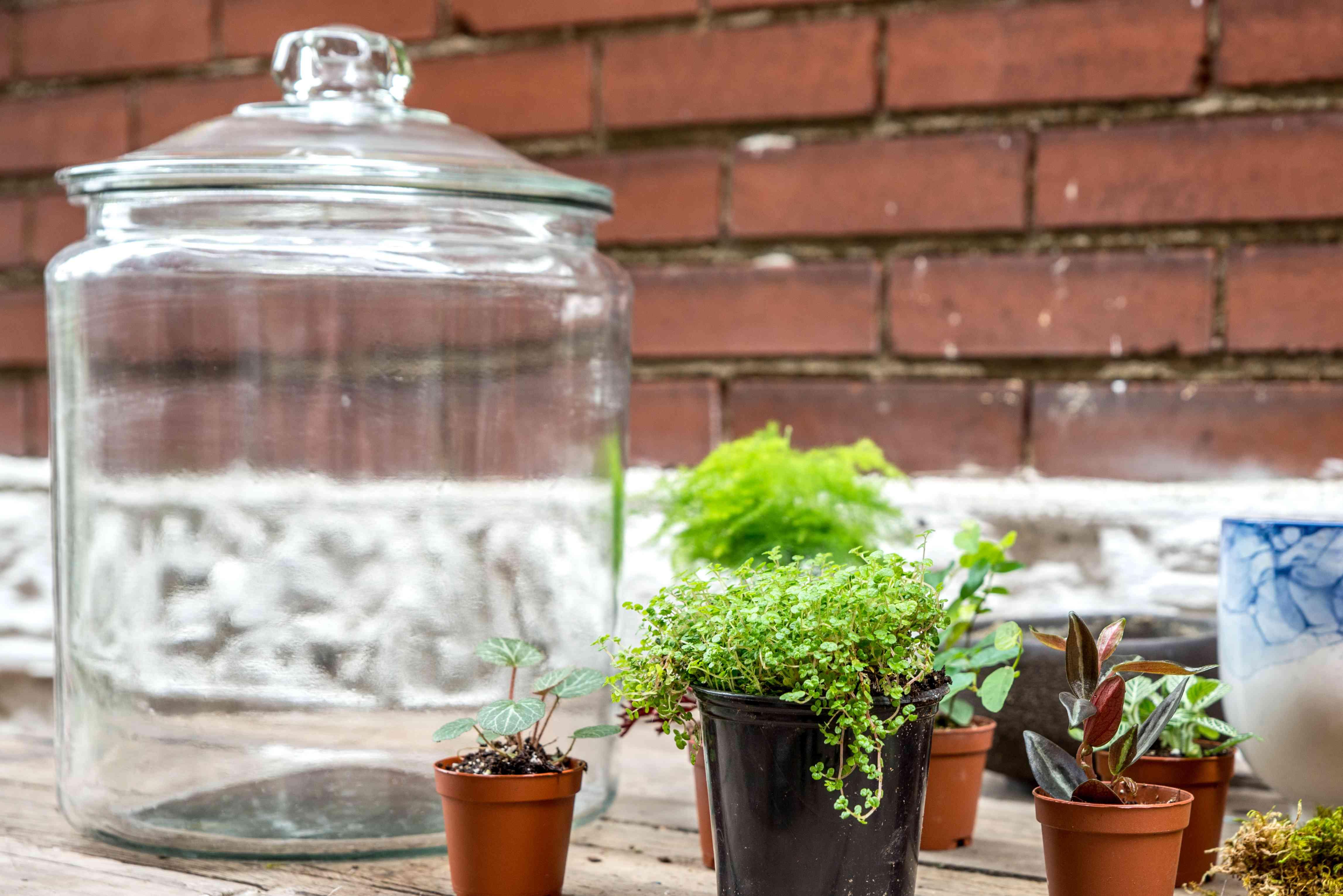 choosing a terrarium container