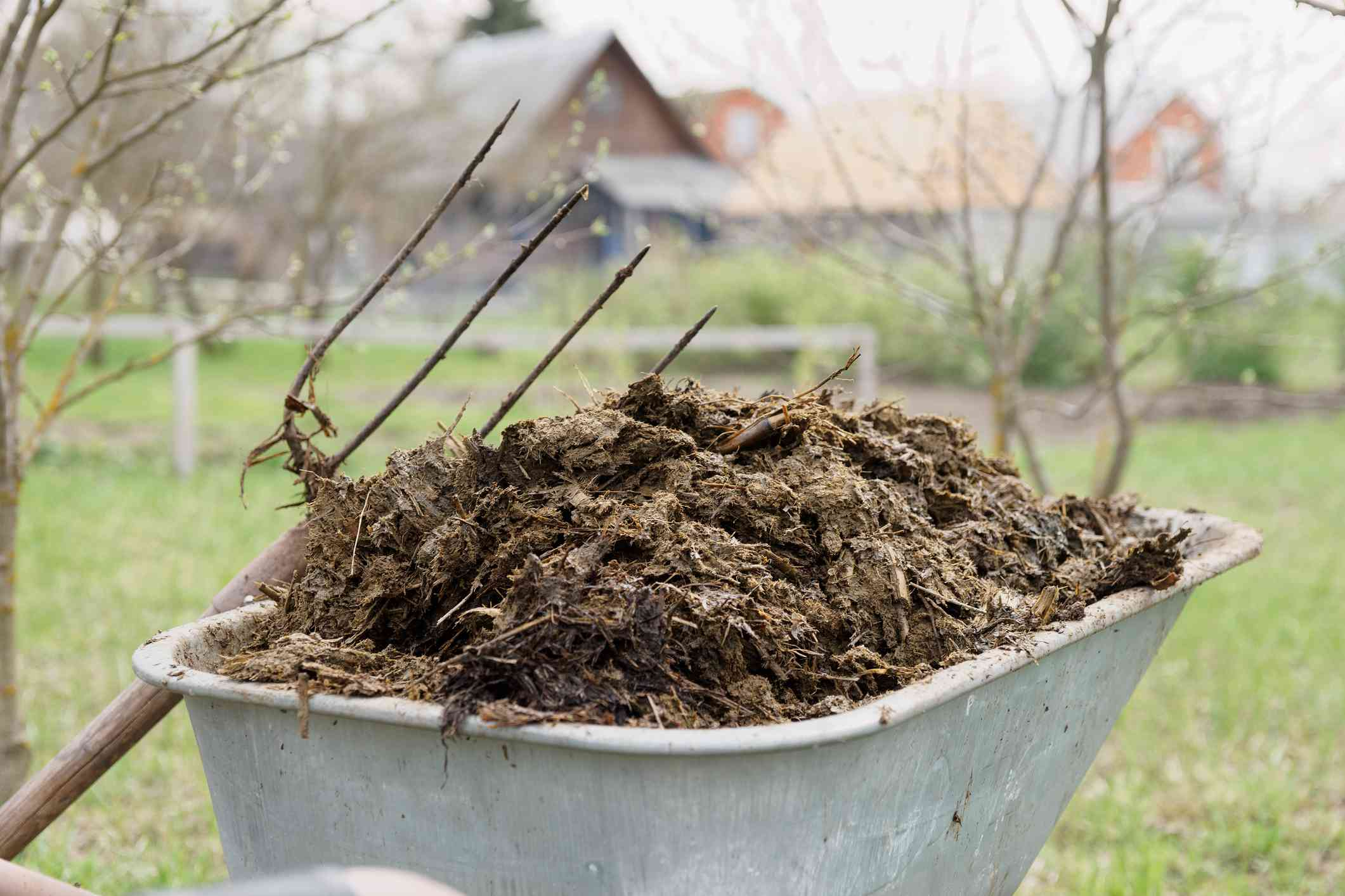 Manure needs to be aged before adding it to the soil