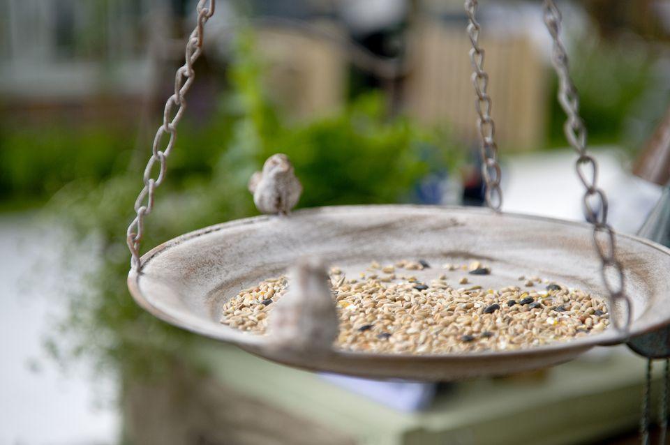 Birdseed feeder