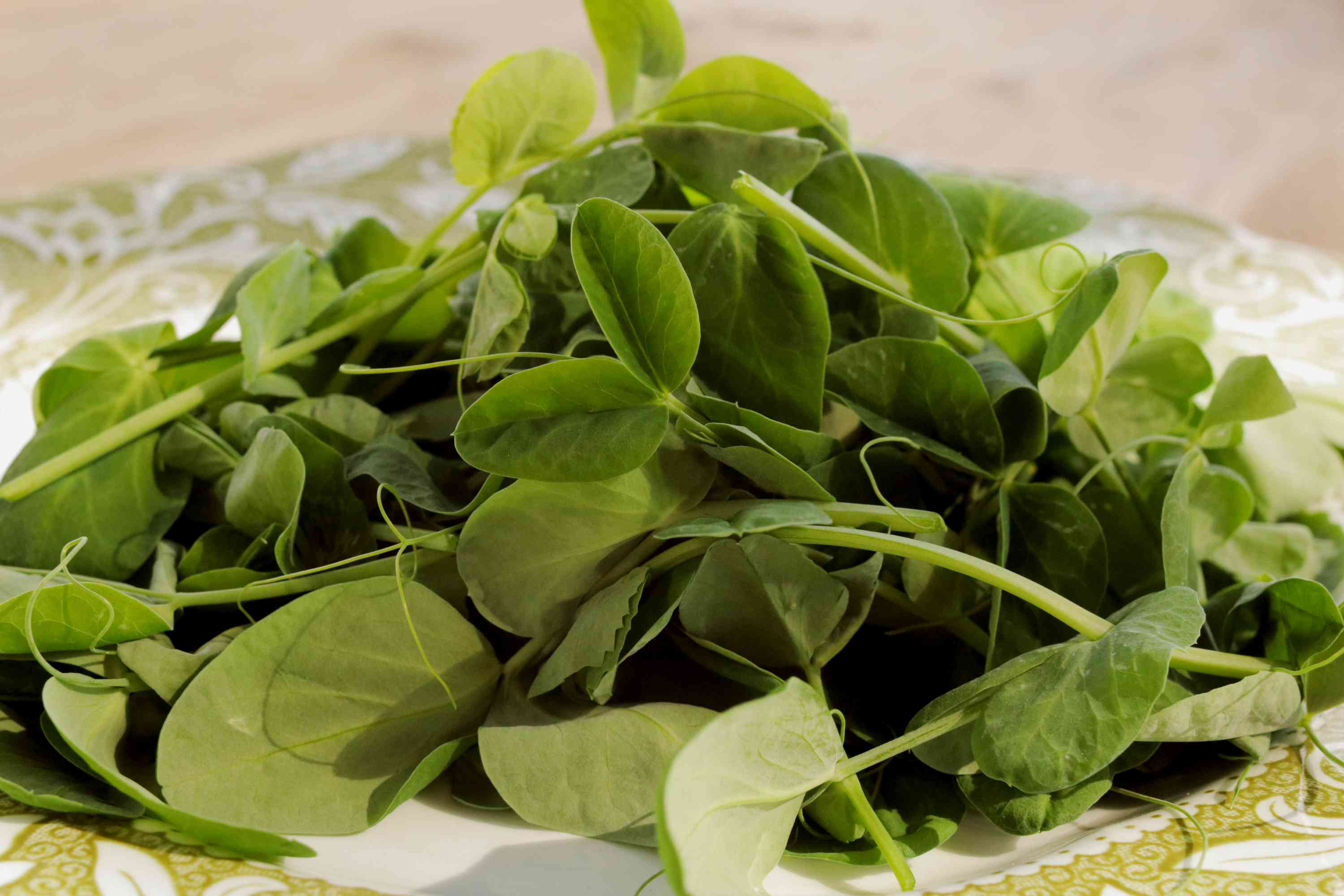 Pea shoots and tendril leaves in white and green ceramic bowl closeup