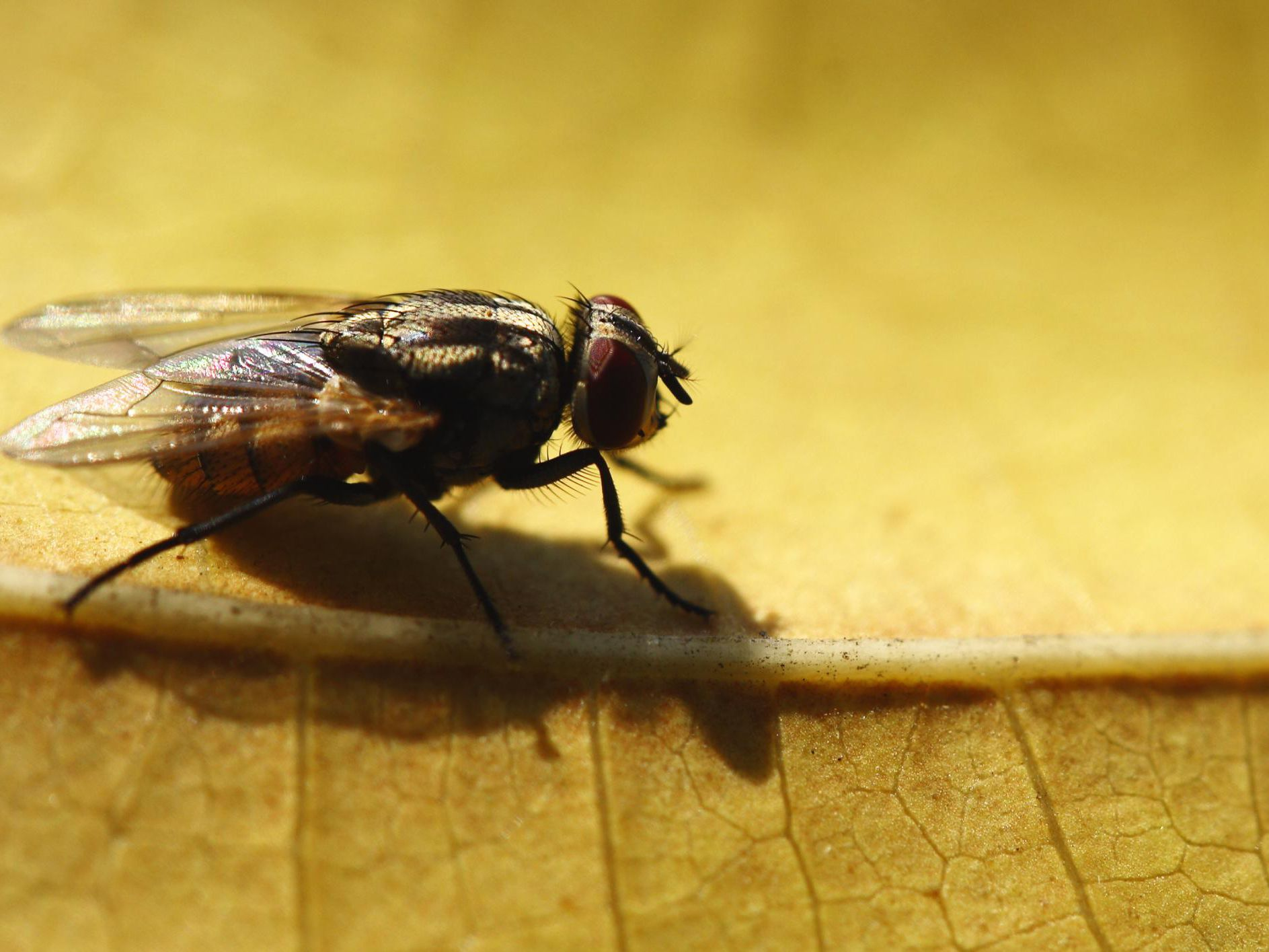How To Get Rid Of A Fly Infestation Outside