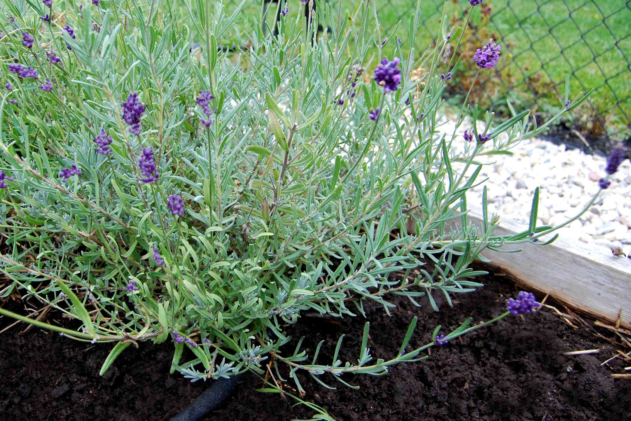 flower bed with loam soil