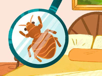 Bed bug under a magnifying glass