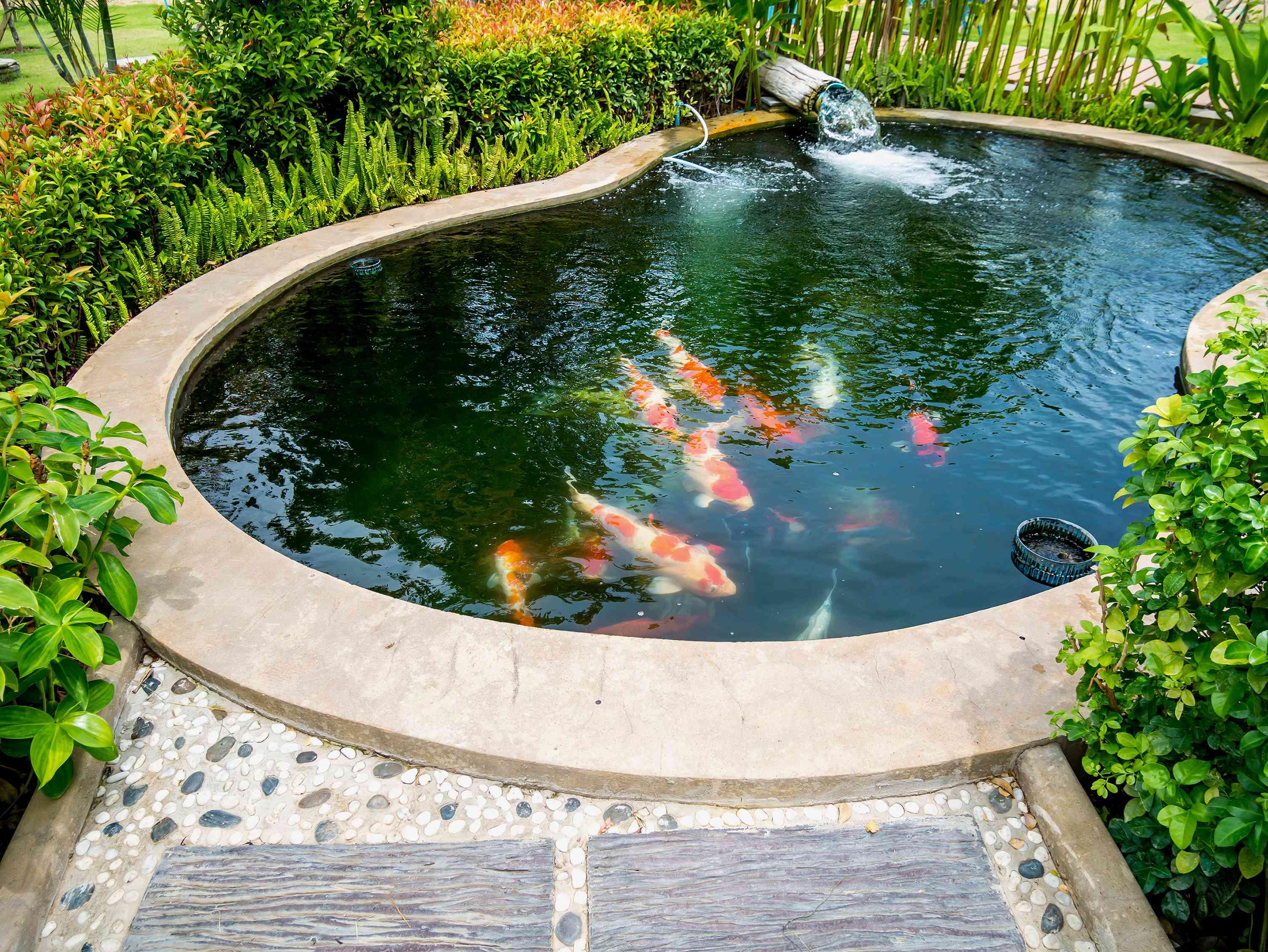 A bean-shaped koi pond.