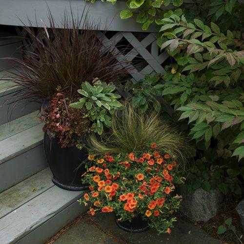 Ornamental grasses and orange million bells fall container garden idea