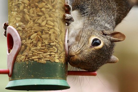 Squirrels and Bird Feeders - Easy Tips To Keep Squirrels Out Of Bird Feeders