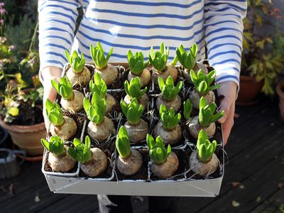 person holding box of bulbs