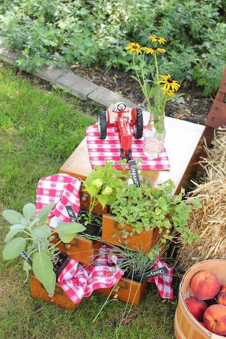 Un racimo de hierbas en macetas