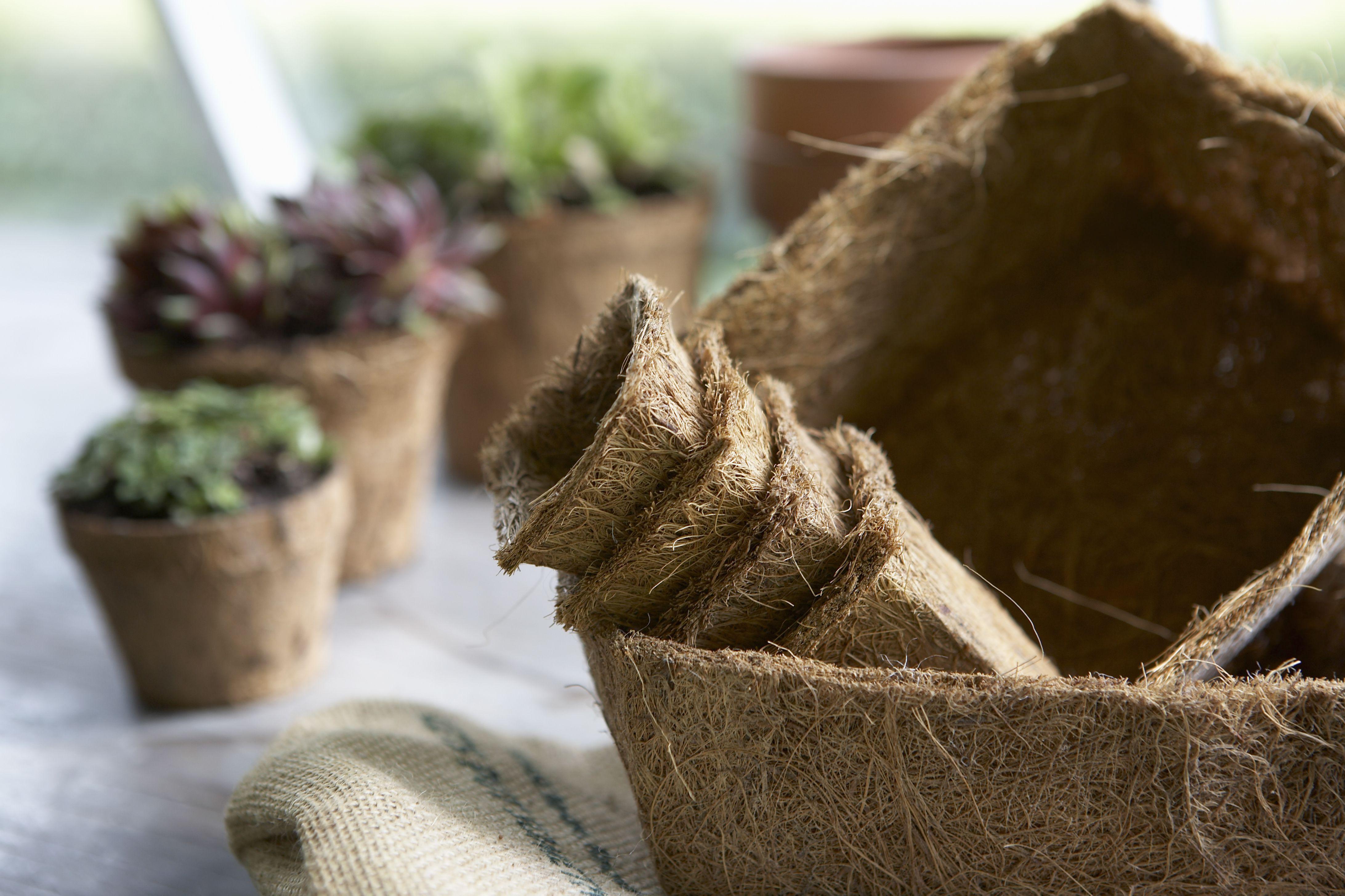 Macetas de coco biodegradables
