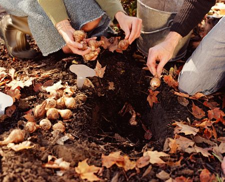 Planting Bulbs In Ground