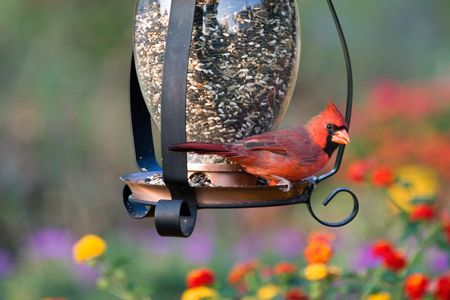 Birds In Your Backyard how attracting wild birds to your backyard helps