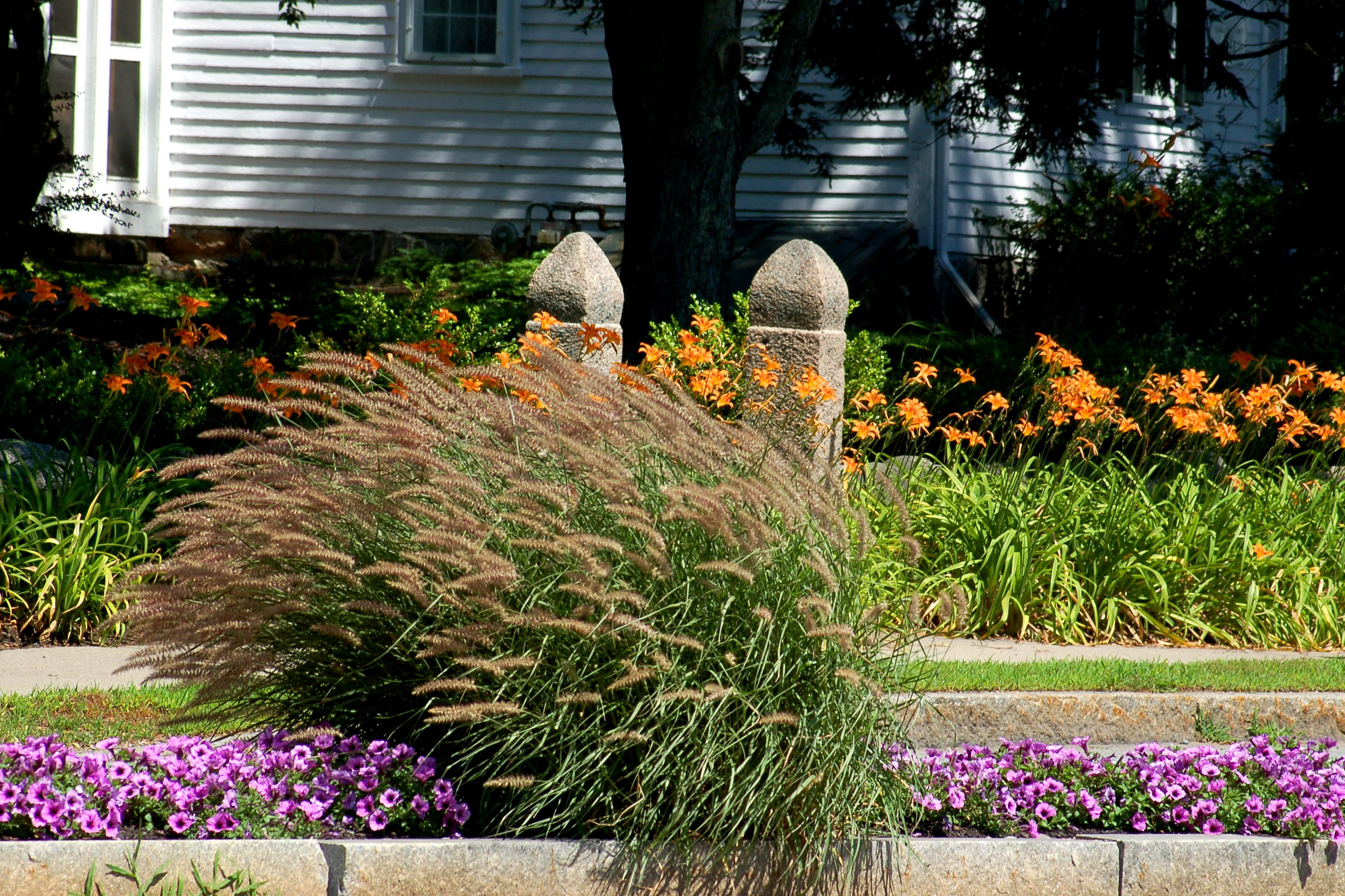 A flower border with ornamental grass. The latter brings up eye level.