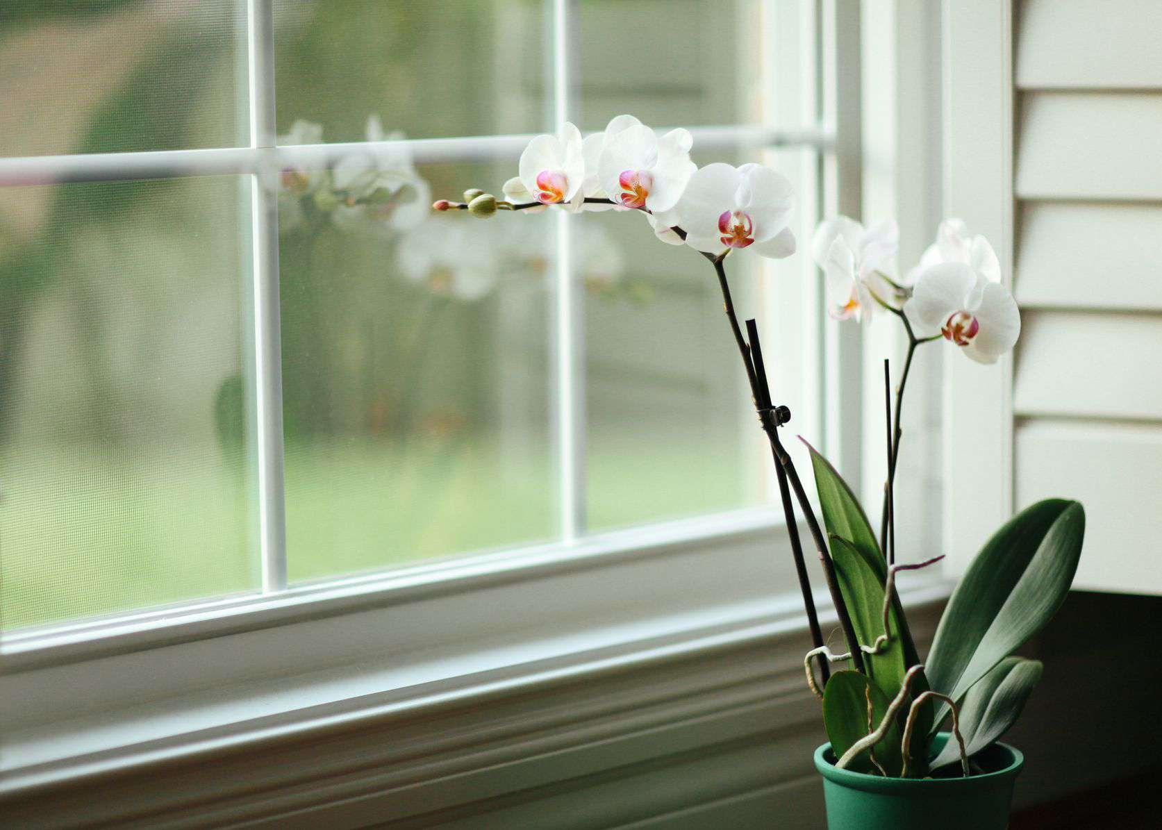How To Get Orchids Bloom And Rebloom