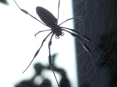 6 Things to Expect From a Pest Control Service Visit