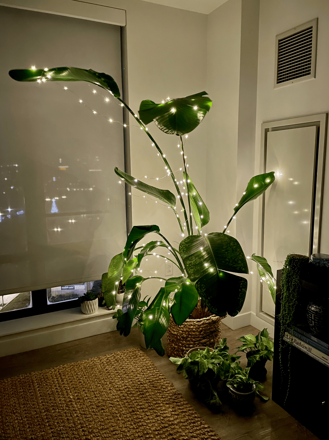 plant decorated with lights for Christmas