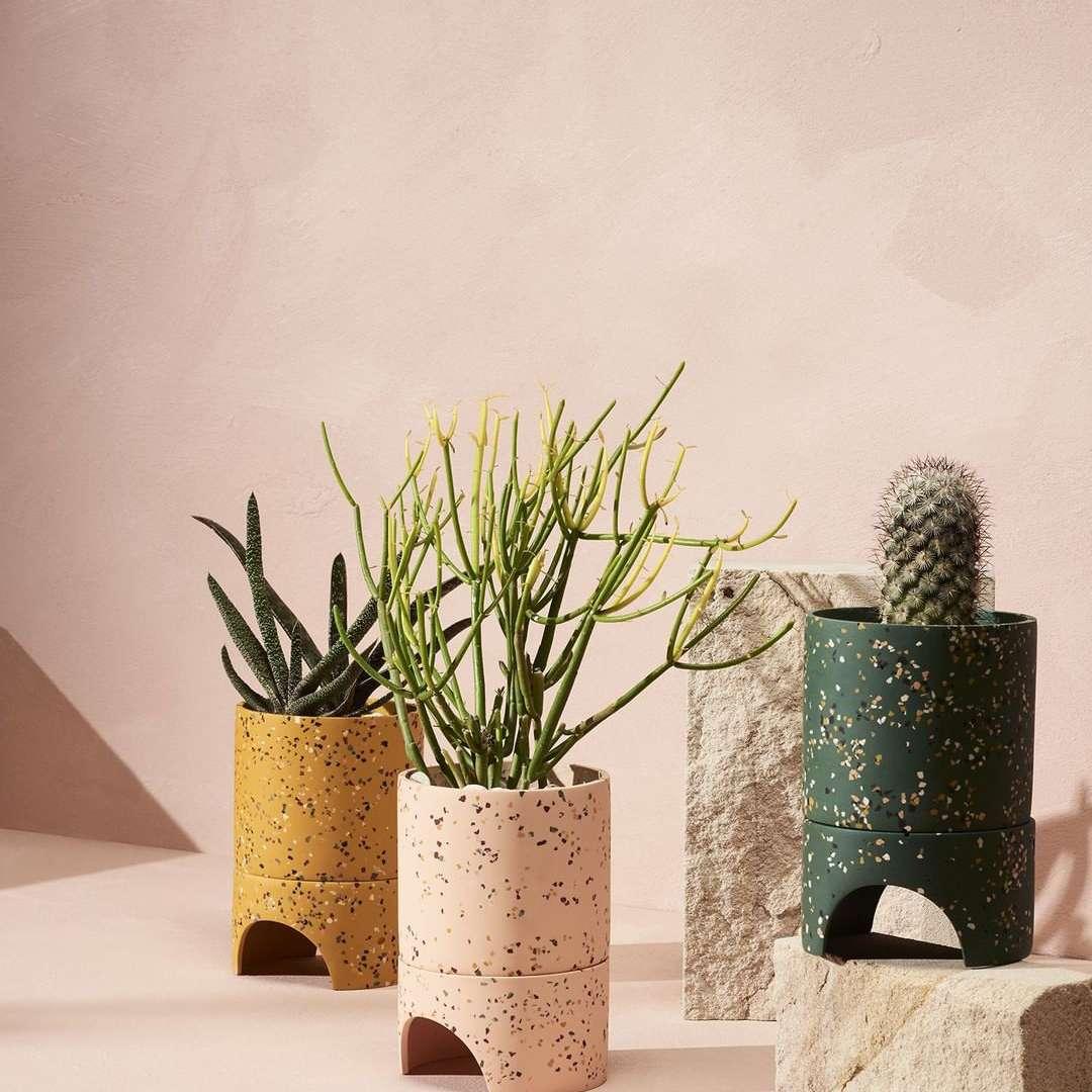 Terrazzo planters with cactus