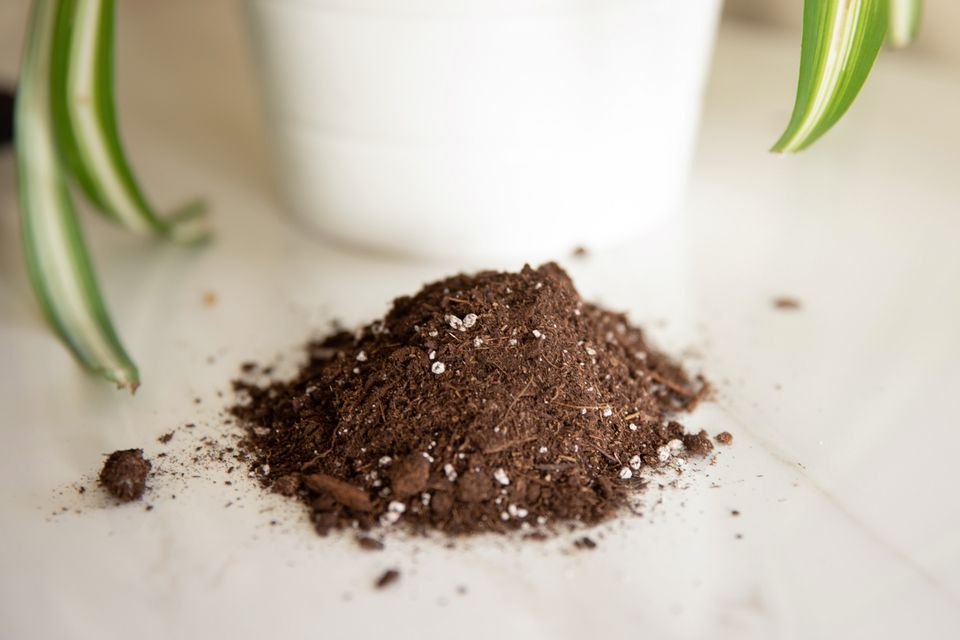 potting soil next to a houseplant