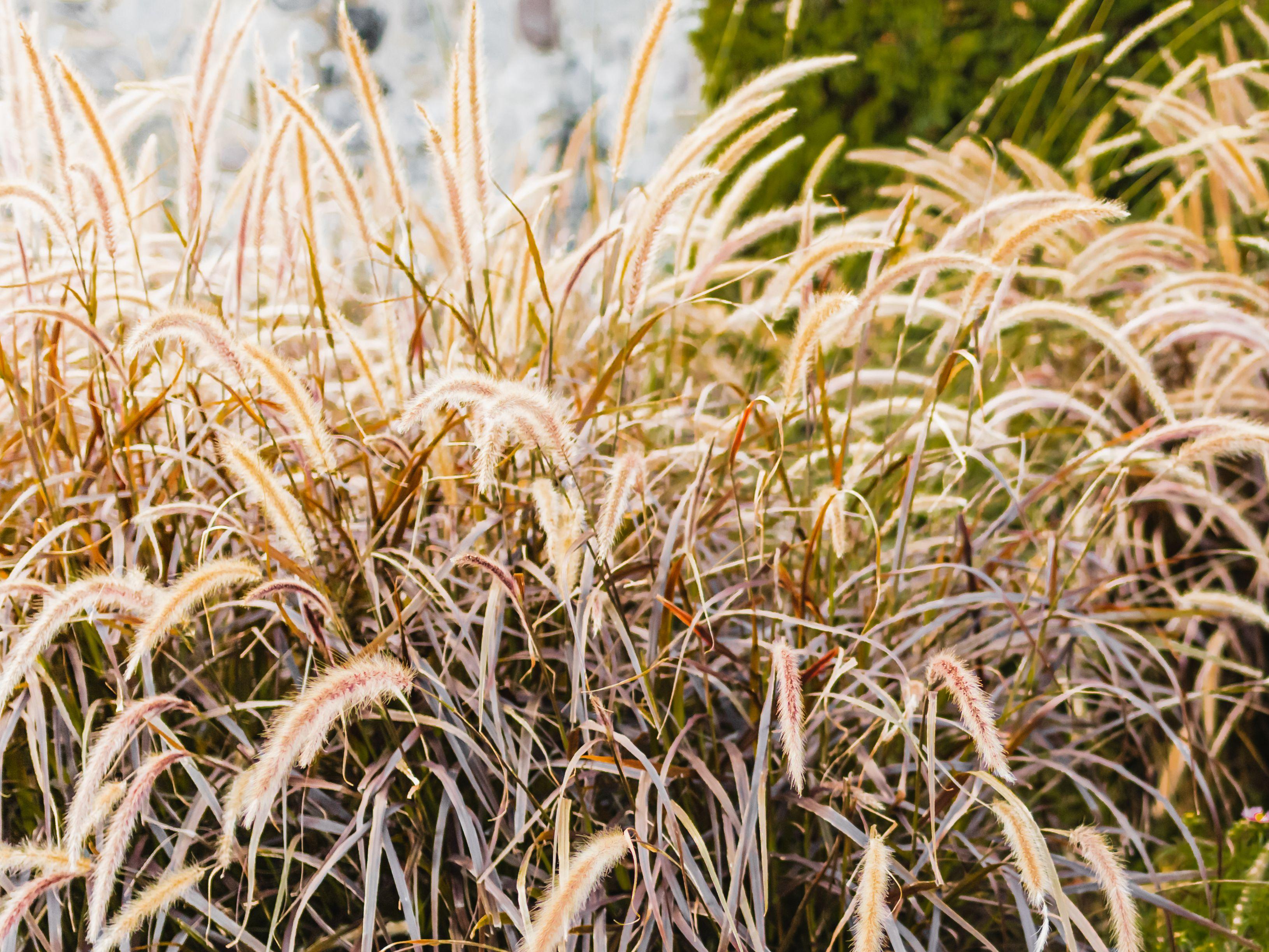 15 Best Plants For Drought Tolerant Gardens