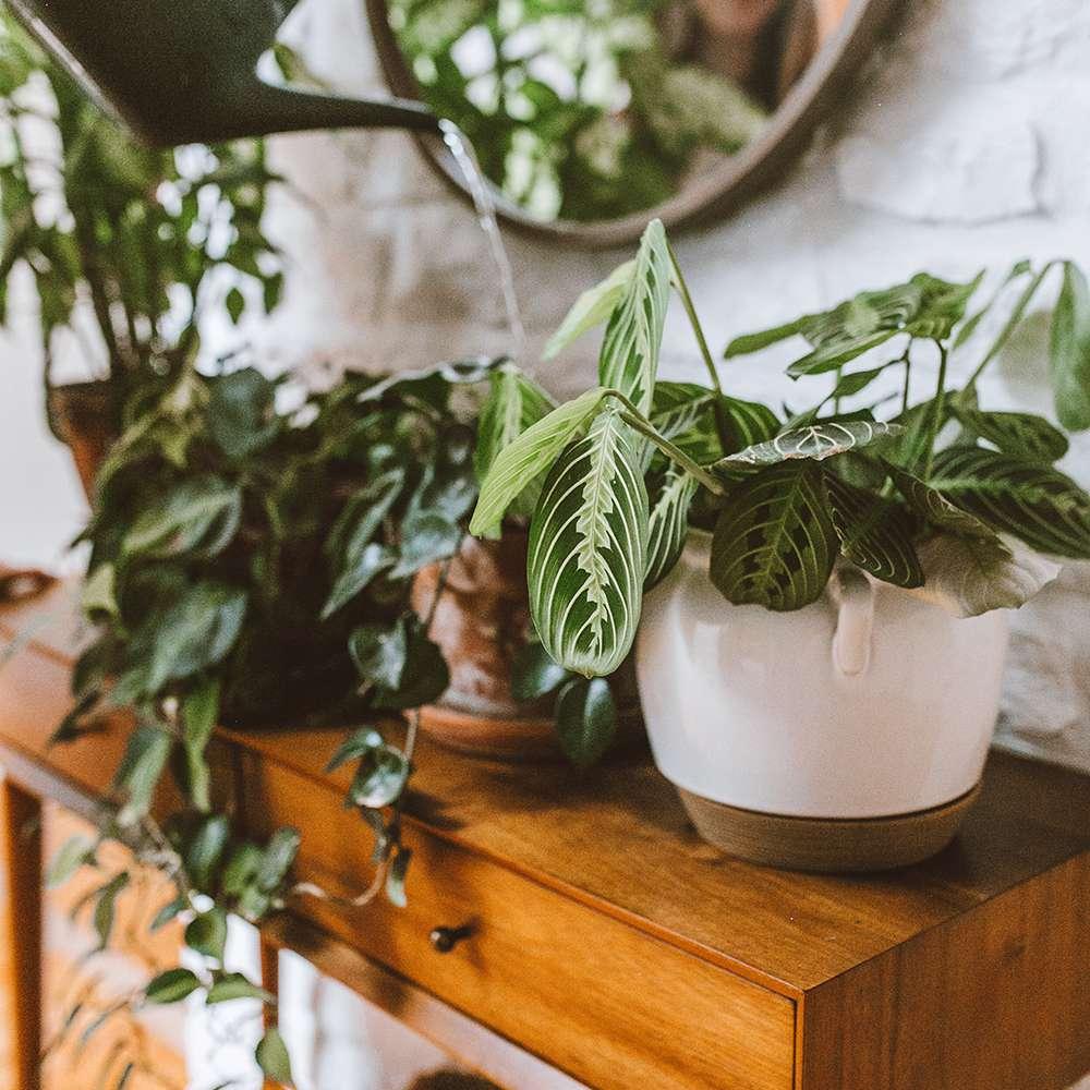 Olivia Watson plant shelf