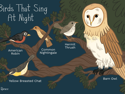 Birds Singing at Dawn and What it Means