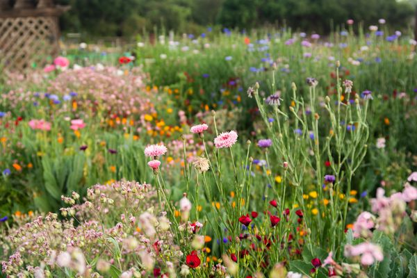 Wildflowers with different colors and varieties in garden